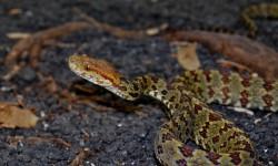 ¿Cómo son los reptiles y anfibios del noroeste del Uruguay?